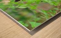 3646-Bear Lunch Wood print