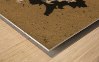 Murex Ramosun Rams Horn Shell Wood print