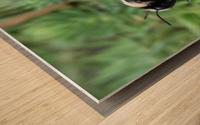 Black Bumble Bee Wood print