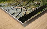 trail Wood print