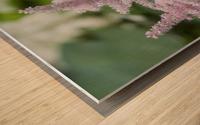 Pink Astilbe 1 Wood print