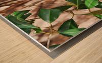 Tufted Titmouse Wood print