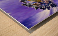 Blue Flower Anemone Close-up Macro Wood print