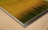 Merganser In Setting Sun Wood print