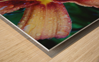 Eye of the tiger lily Wood print
