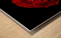 Anemone_2 Wood print