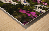 Daisies Of White And Pink Wood print