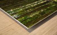 Redwood National Park Wood print