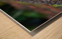 DSC_8076 Wood print