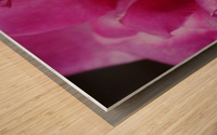 Heart Of Pink Rose Wood print