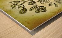 Mistletoe Wood print