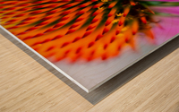 Treat a Cold Wood print