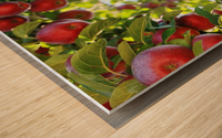 Apples Orchard- Harvest Wood print