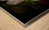 White Azalea  Wood print