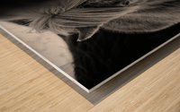 Icelandic Foal Wood print