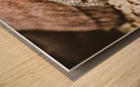 The Komodo Dragon  Wood print