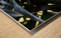 Raindrop on a green leaf Wood print