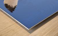 Seagull Overhead Wood print