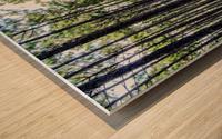 Forest Escape Wood print