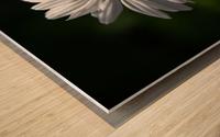 marguerite Wood print