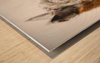 Close-up of Alpaca Wood print