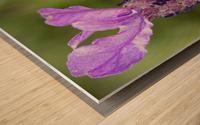 Bee On Lavender Wood print