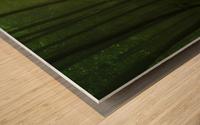 Spring Promise Wood print