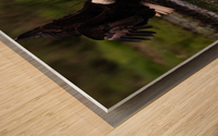 Wesley Allen Shaw 04816 Wood print