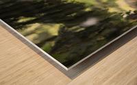 Buzzard Wood print