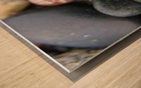 Sea Glass and Seashell Wood print