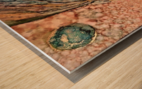 Dream Spell  Wood print