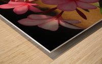 Pink Plumeria 2 Wood print