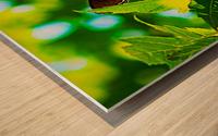 Resting on A Maple Leaf Wood print