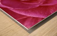 Rose Blossom Wood print