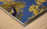 Forest During Autumn, Kananaskis, Alberta, Canada Wood print