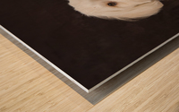 Shih Tzu-Poodle On A Brown Muslin Backdrop Wood print