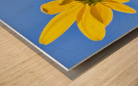 Yellow flower against a blue sky; Bolivia Wood print