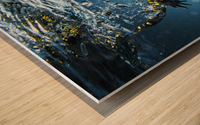 Salamander (Caudata) swimming in water; Tarifa, Cadiz, Andalusia, Spain Wood print