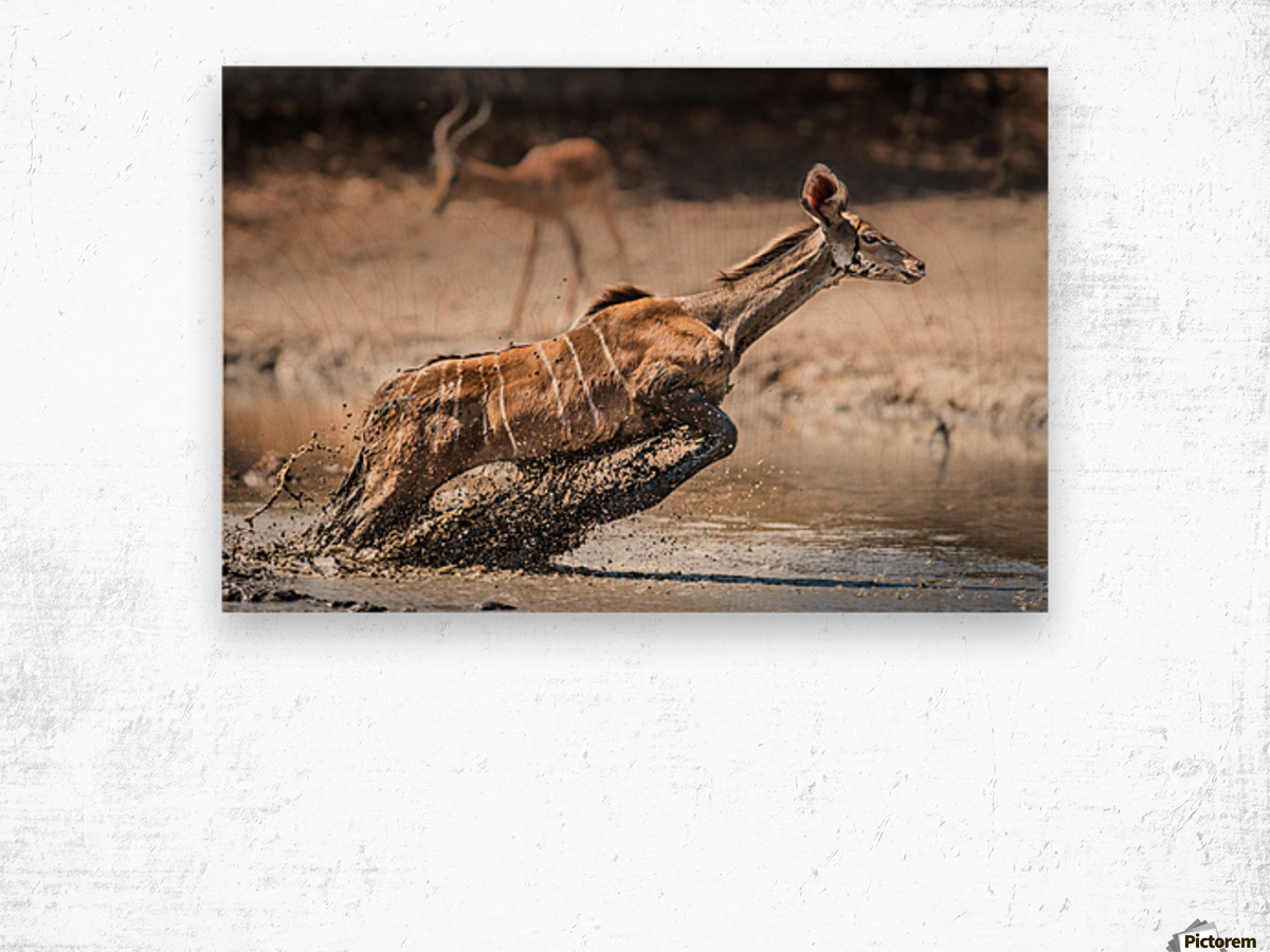 Kudu jump Wood print