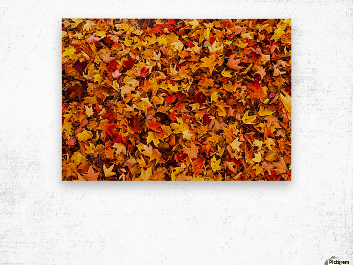 Autumn leaves on the ground; Iron Hill, Quebec, Canada Wood print