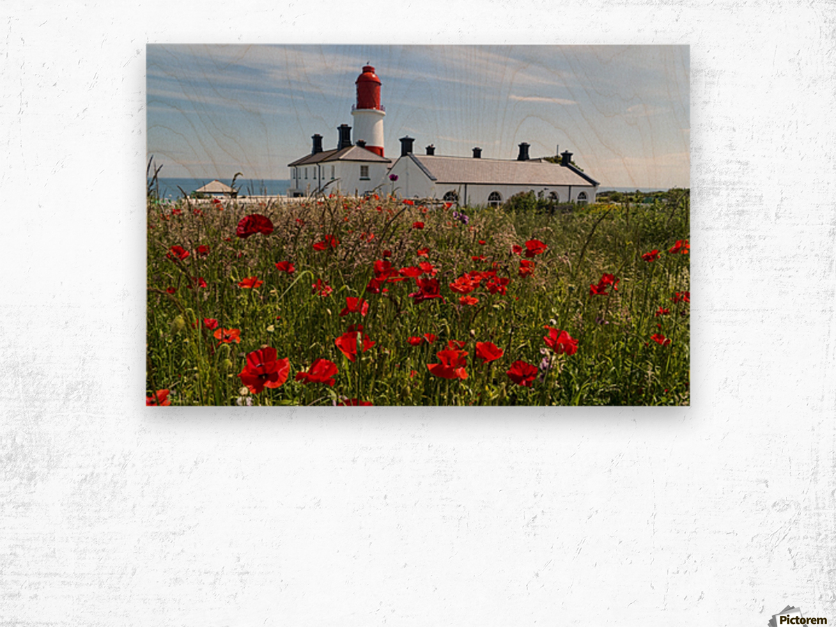 Souter Lighthouse with a field of red poppies in the foreground; South Shields, Tyne and Wear, England Wood print