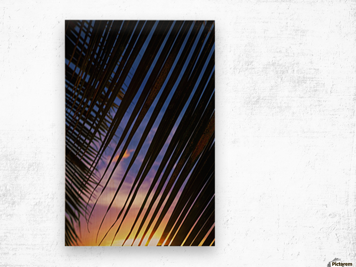 Close-up of silhouetted palm fronds with beautiful sunset color sky in the background; Honolulu, Oahu, Hawaii, United States of America Wood print