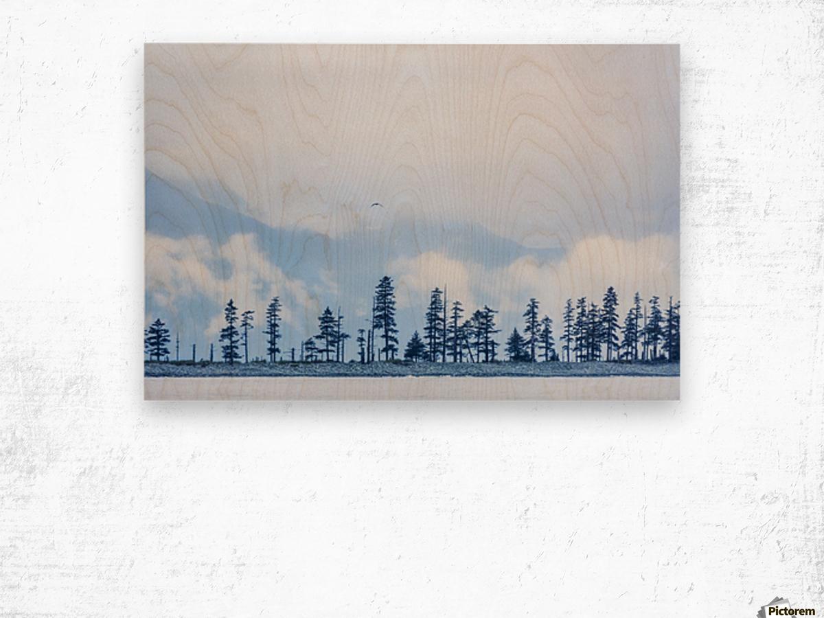 A bird flies above trees under a cloudy sky and fog on the coast of Resurrection Bay, South-central Alaska; Seward, Alaska, United States of America Wood print