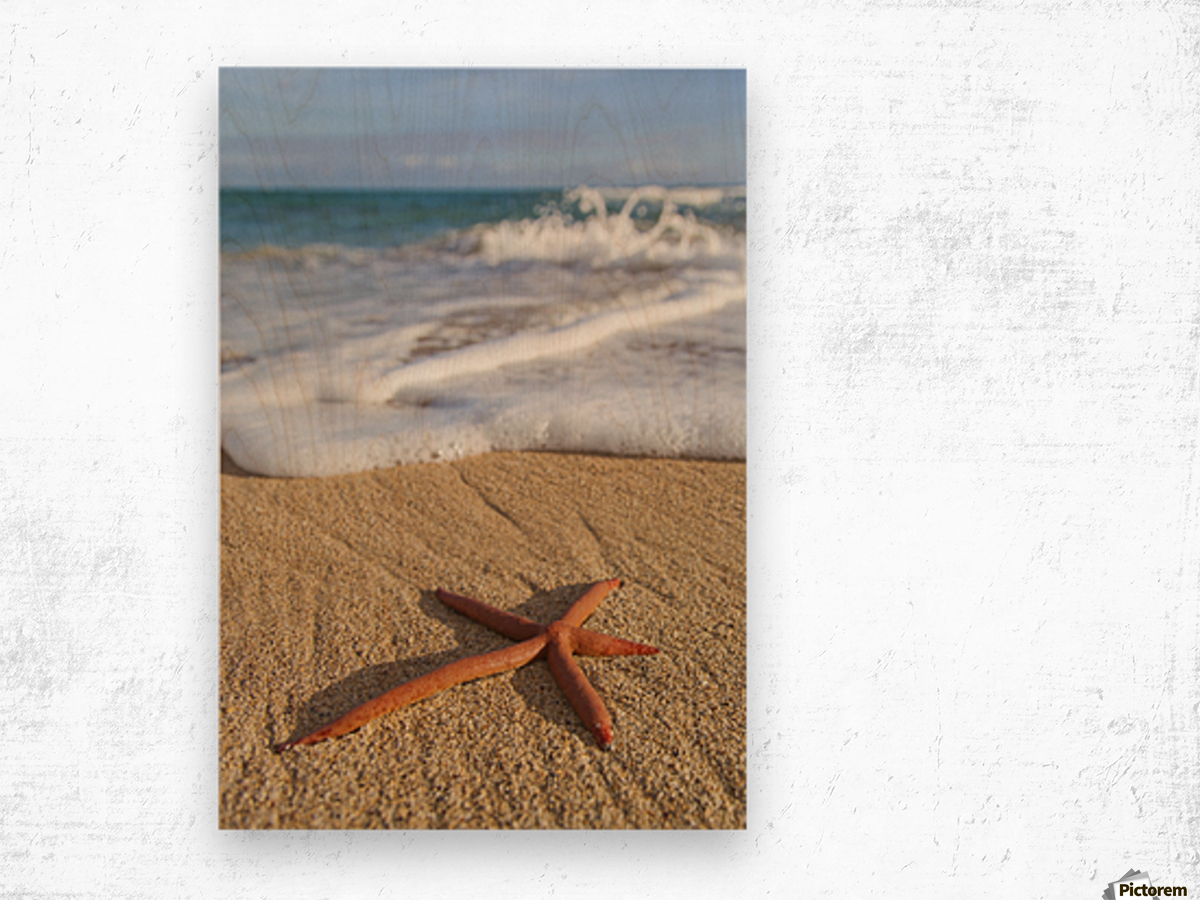 A red live Finger Starfish, also known as Linckia Sea Star, found along a sandy beach with white ocean tide washing up; Honolulu, Oahu, Hawaii, United States of America Wood print