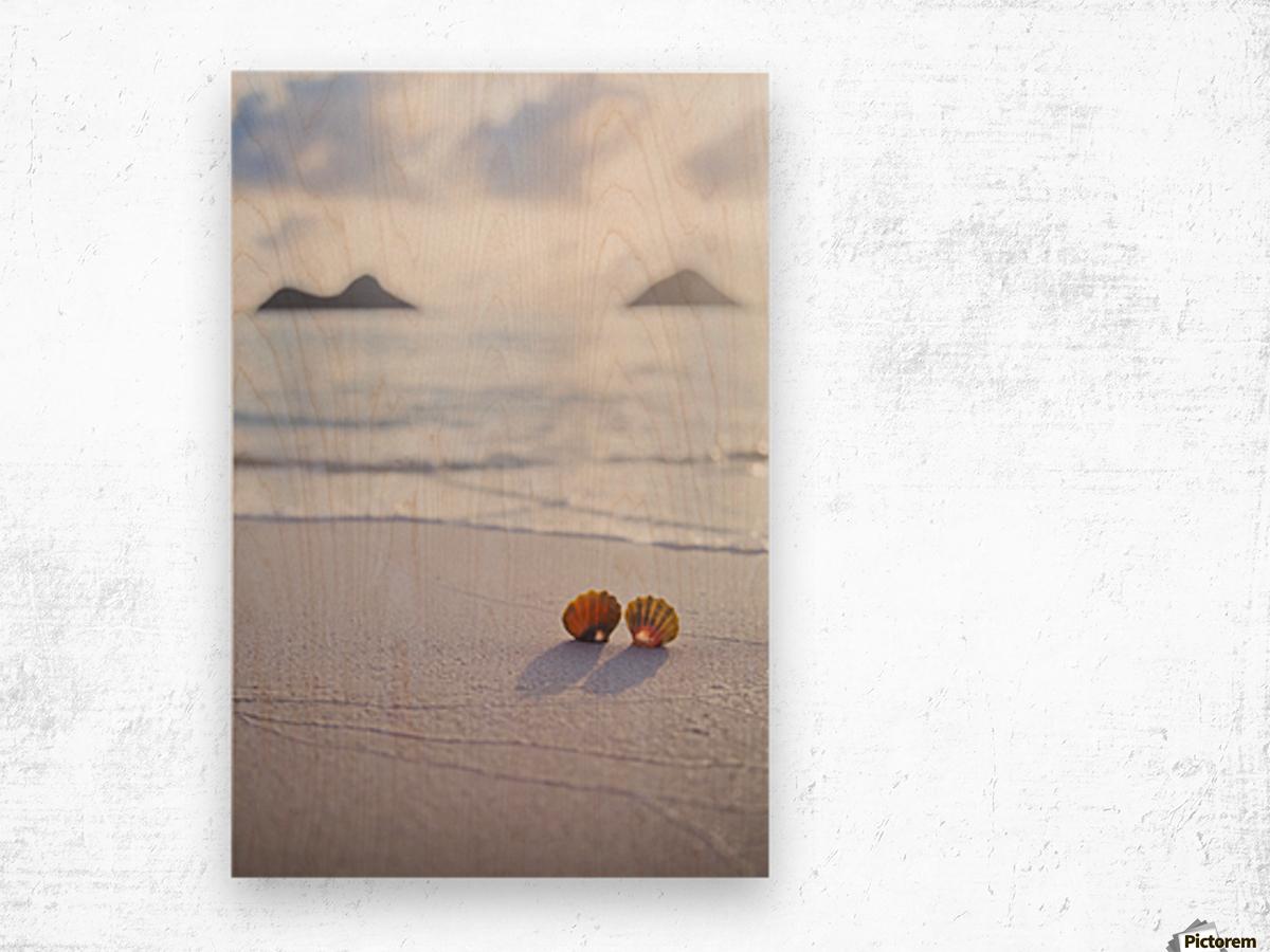 A set of two rare Hawaiian Sunrise Scallop Seashells, also known as Pecten Langfordi, in the sand at Lanikai beach, with Mokulua islands in background; Honolulu, Oahu, Hawaii, United States of America Wood print