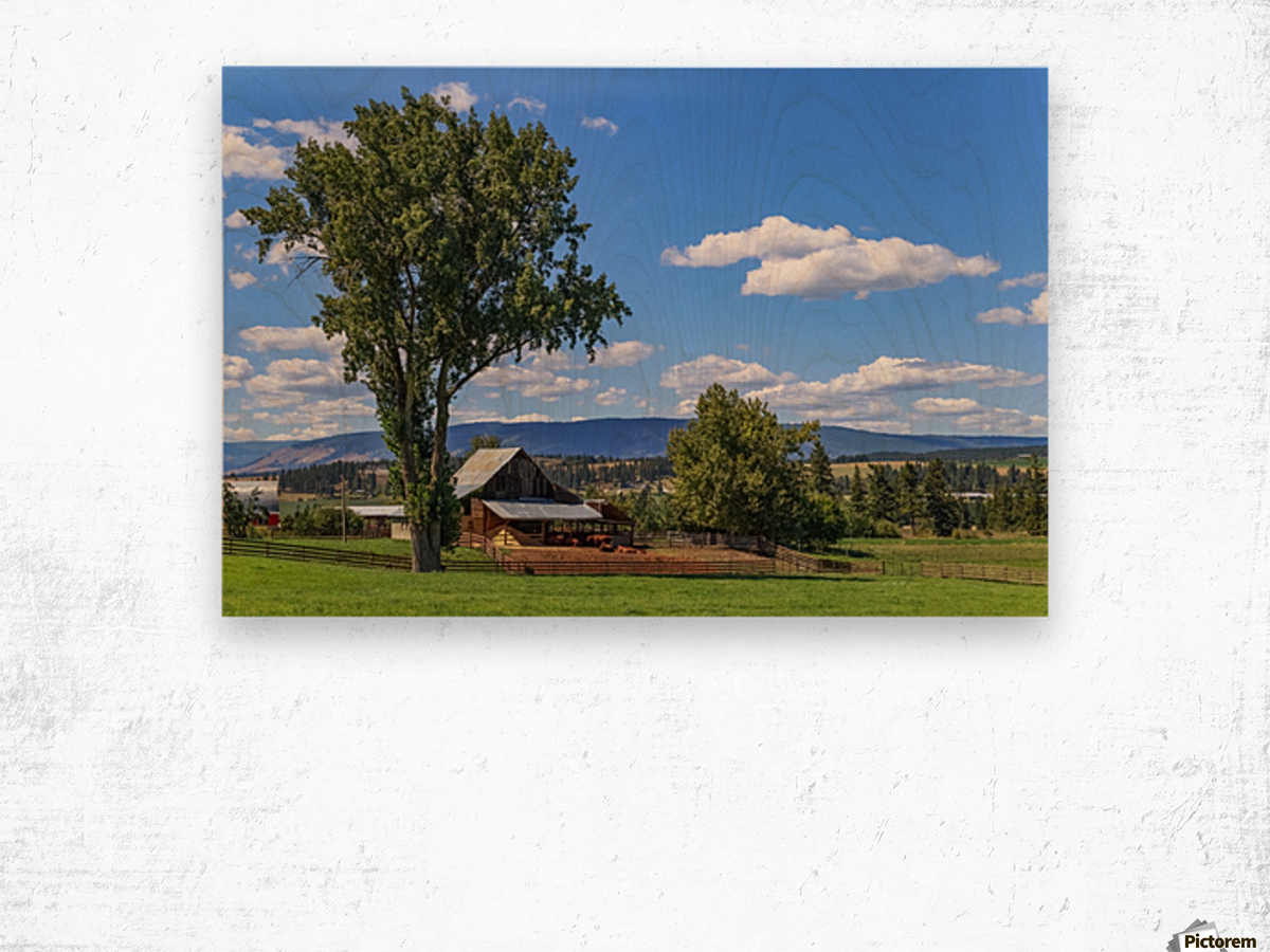 Beef cows rest in the shade of the barn roof under a blue sky with fluffy white clouds in the summer in the North Okanogan; British Columbia, Canada Wood print