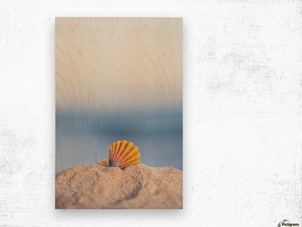 A rare rainbow color Hawaiian Sunrise Scallop Seashell, also known as Pecten Langfordi, in the sand at the beach at sunrise; Honolulu, Oahu Hawaii, United States of America Wood print