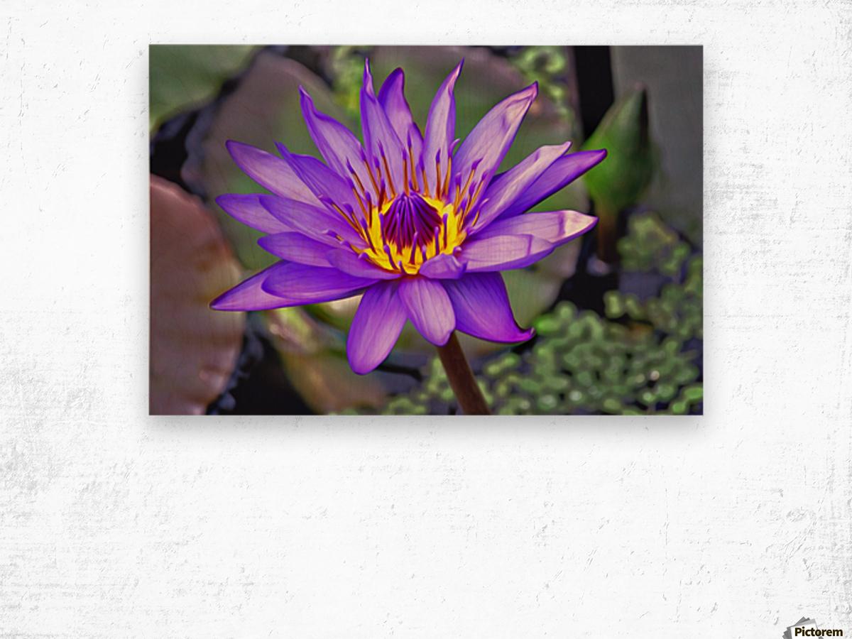 waterflower Wood print