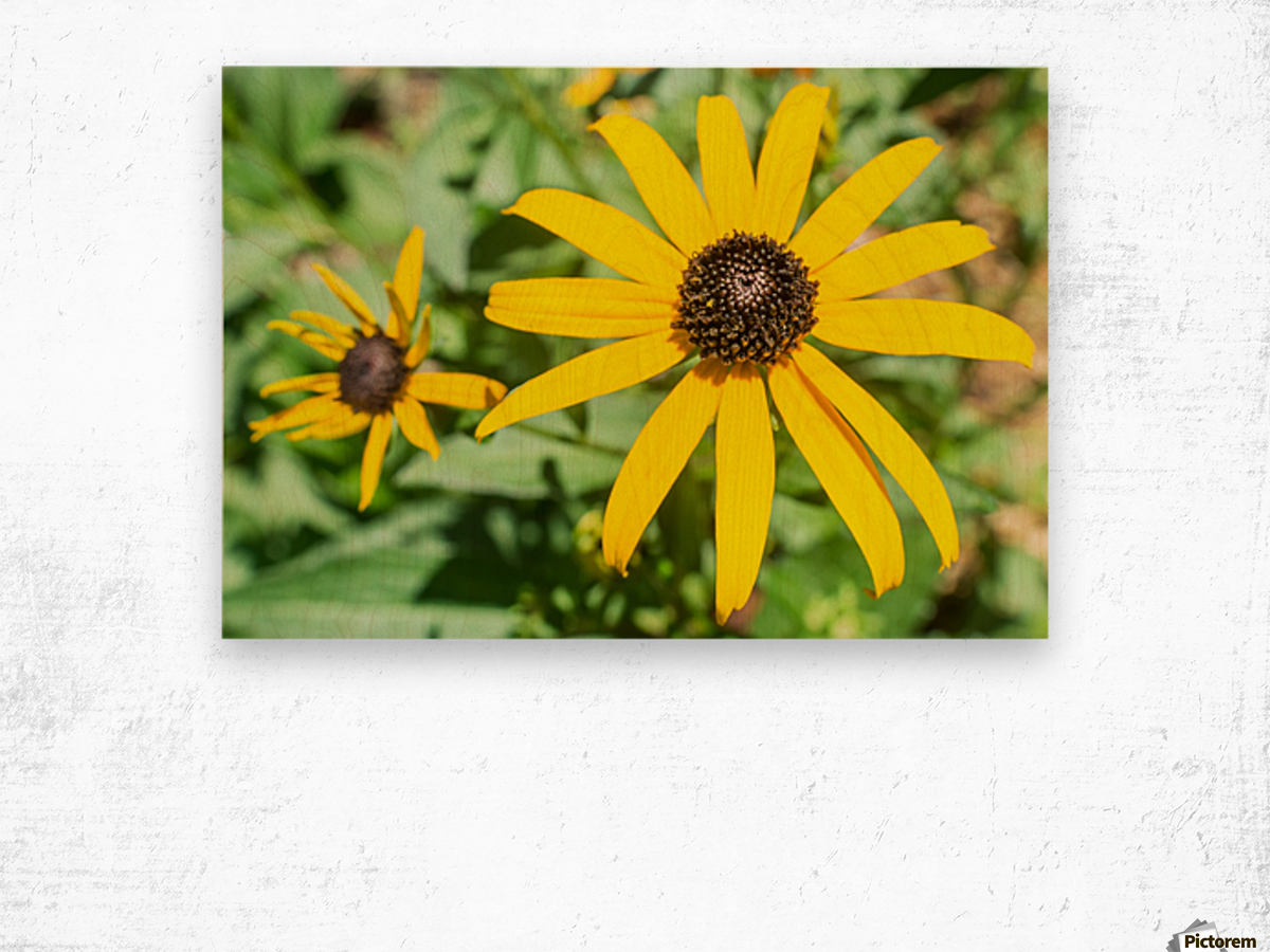 Yellow Cone Flowers  Wood print