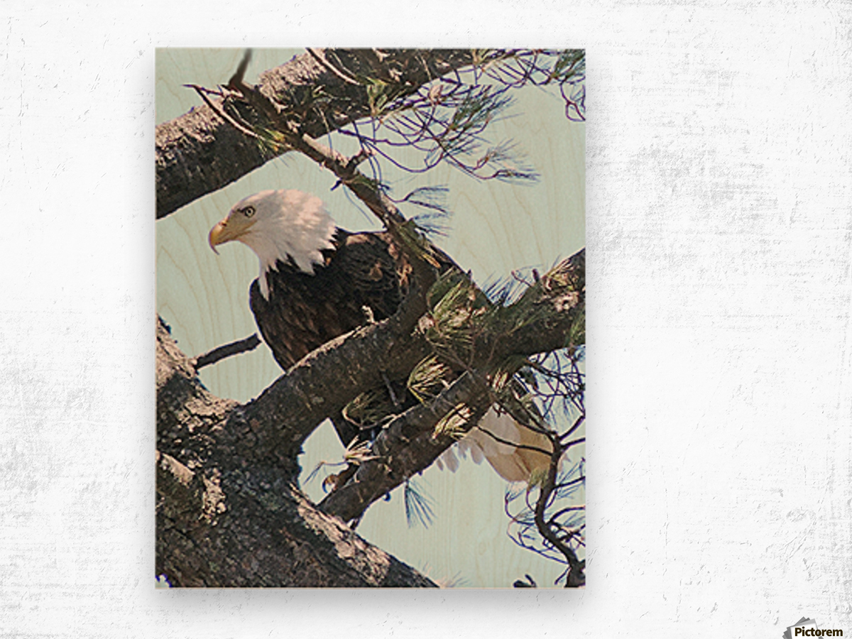 Watchful Wood print